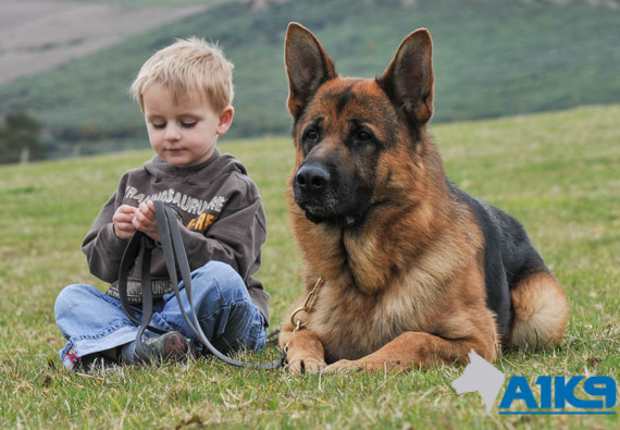 Best Dog For Protecting A Child
