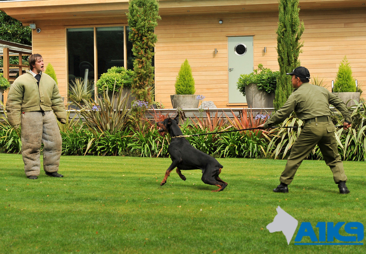 Security dog handler training for residential security team