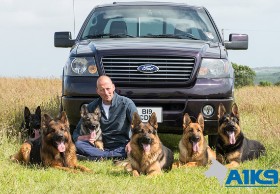 Owner, Charles Wall with six German Shepherd Personal Protection Dogs