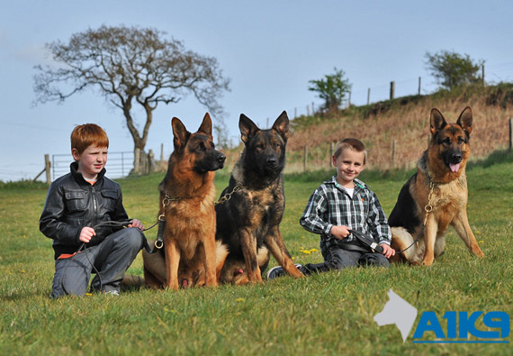 Two children with German Shepherd Personal Protection Dogs at A1K9