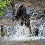 A1K9-Danny-entering-water-at-speed-3014