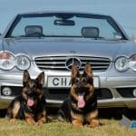 A1K9-Executive-Protection-Dogs-Cyrus-and-Zira-with-AMG-Mercedes-SL65-3655