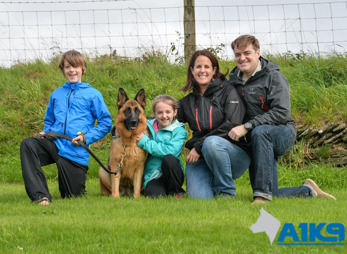 A1K9 Family Protection Dog (12)
