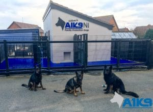 A1K9 Family Protection Dog (2)
