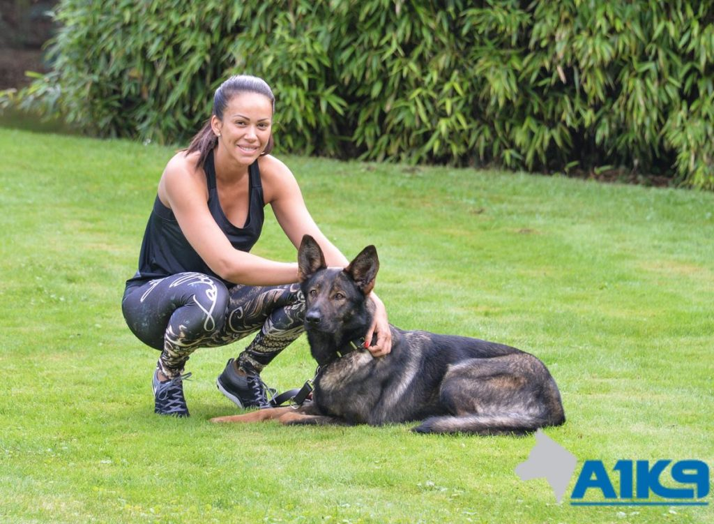 how to train a protection dog
