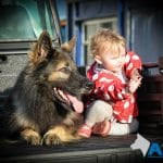 A1K9-Family-Protection-Dog-Harry-with-baby-8779