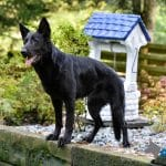 A1K9-Family-Protection-Dog-Jana-Standing-by-wishing-well-6766