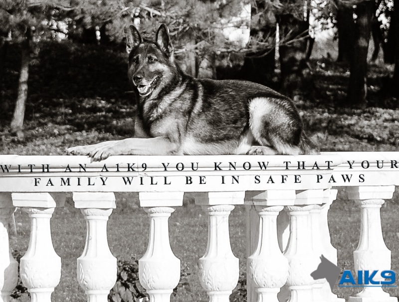 A1K9-Family-Protection-dogs
