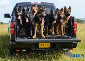 A1K9 Protection Dogs