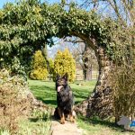 A1K9-Trained-Family-Protection-Dog-Aran-in-garden-of-new-home