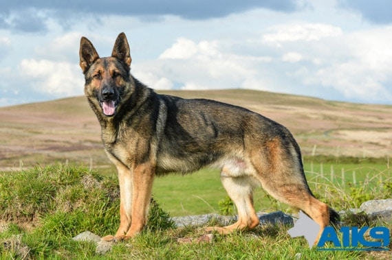 A1K9 family protection Q8