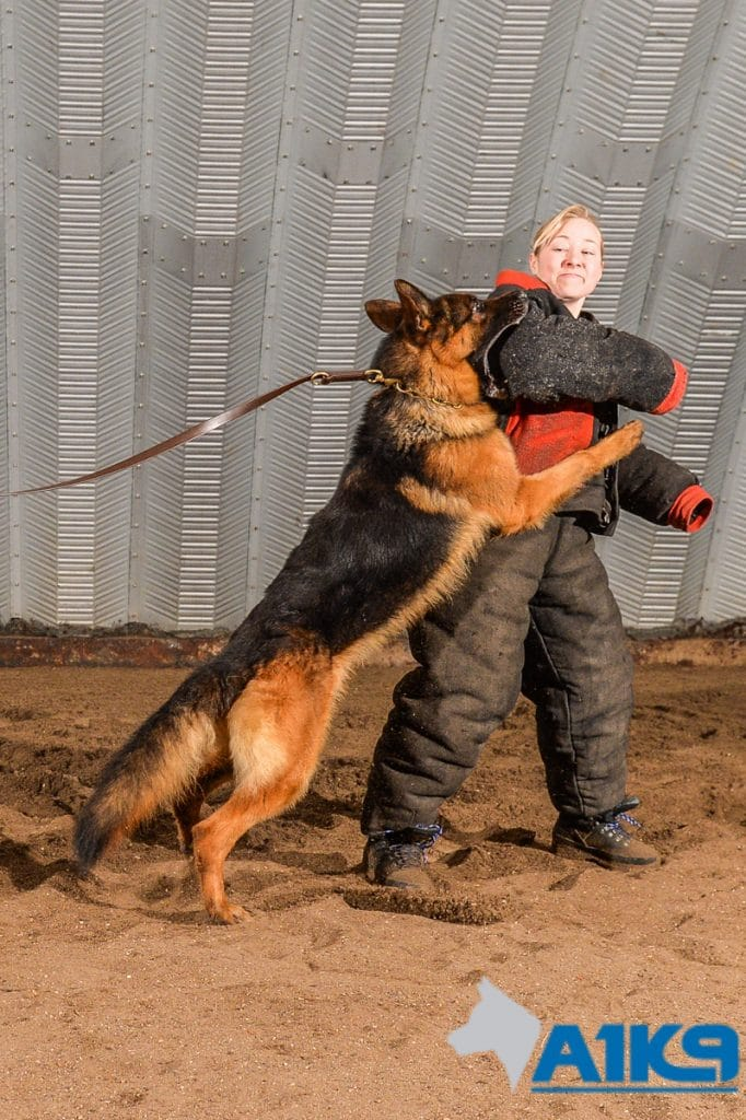 A1K9-family-protection-dog-