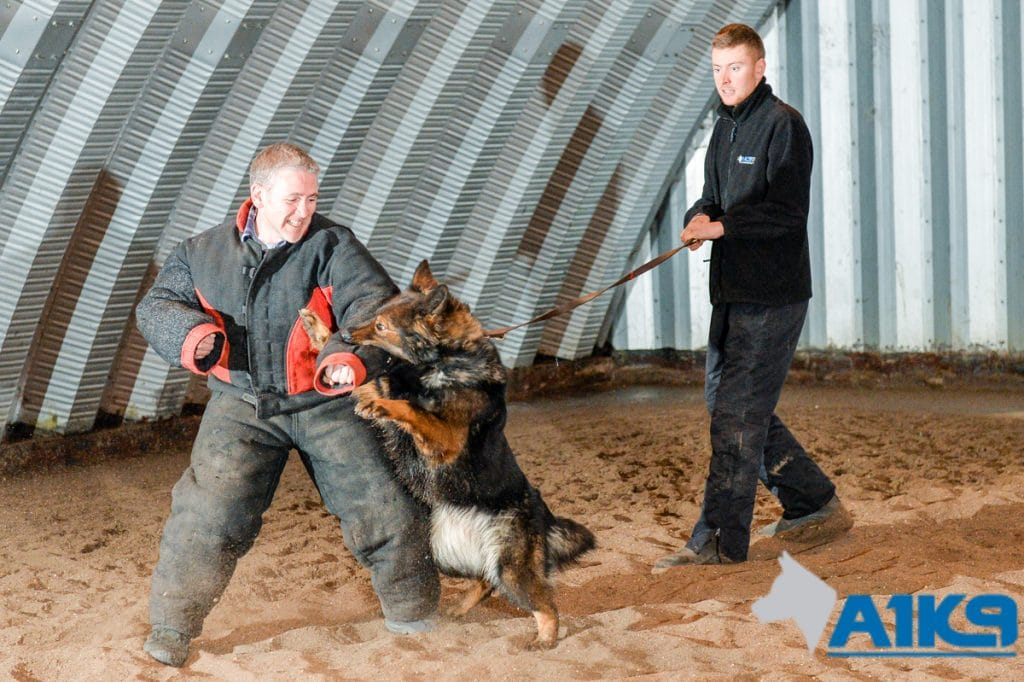 A1K9-family-protection-dog-10