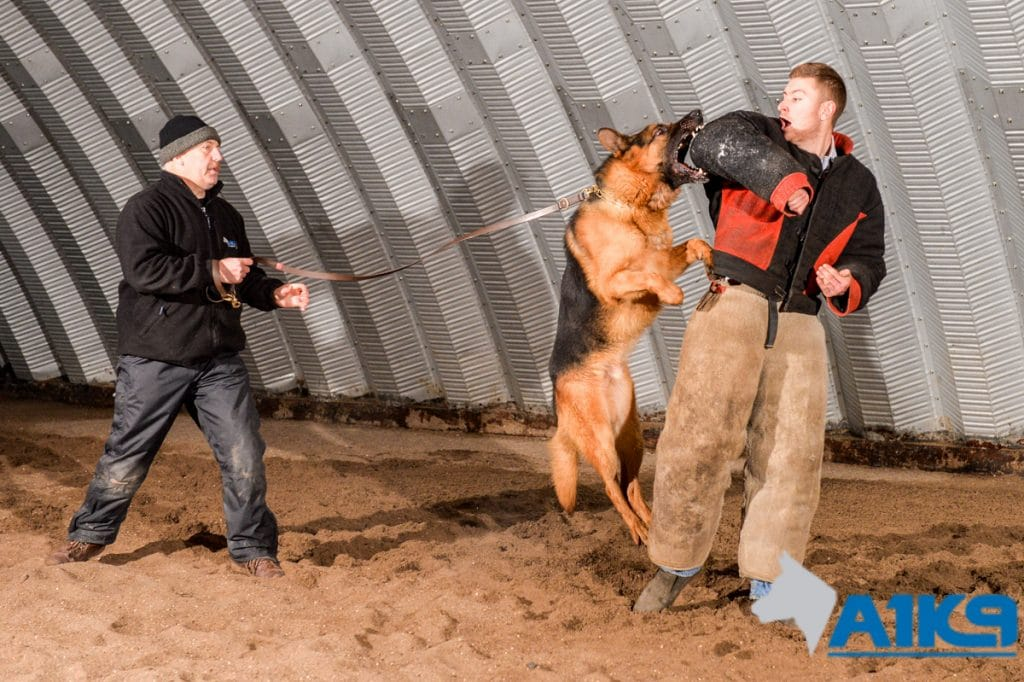 A1K9-family-protection-dog-12