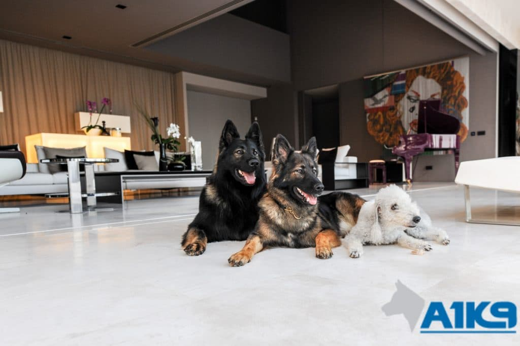 A1K9-family-protection-dog-8