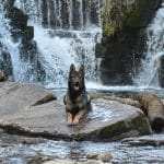 A1K9-family-protection-dog-Lord-at-waterfall-6516