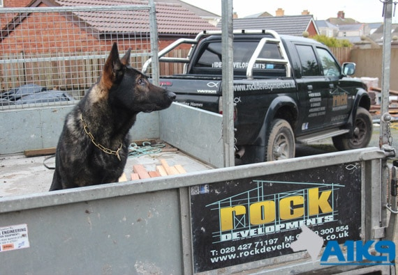 A1K9 family protection dog busy life Q6