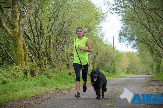 A1K9 family protection dog new jogging companion