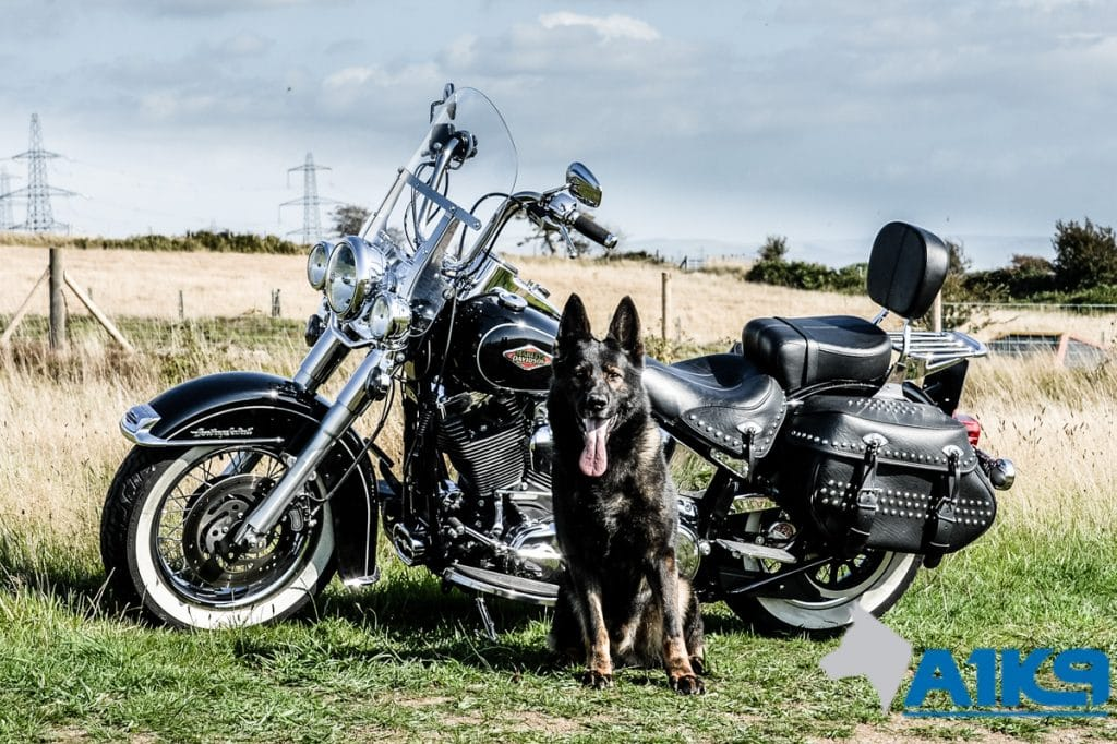 A1K9-family-protection-dog-wagary-harleydavidson-2902