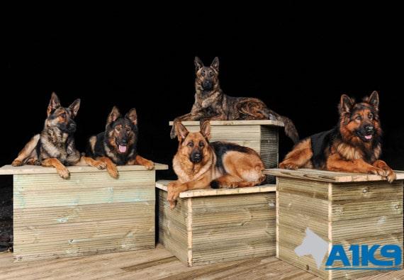 A1K9 family protection multdogsi Q1