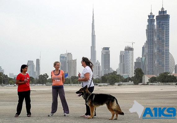 A1K9 personal protection dog handover Dubai img