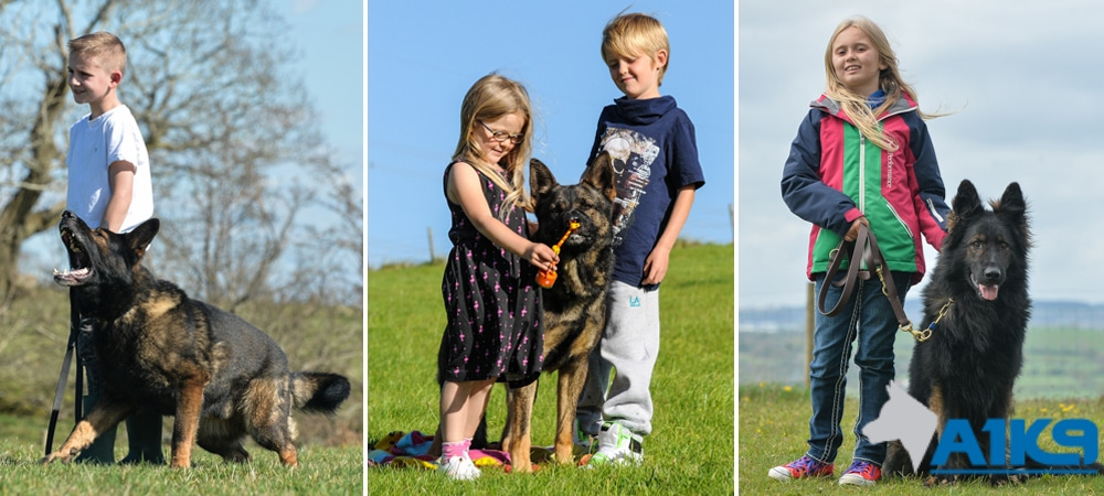 Family Protection Dogs Good With Children