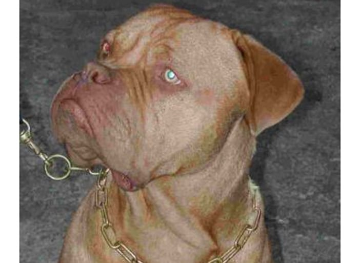 Previously Sold Dogs - Buster