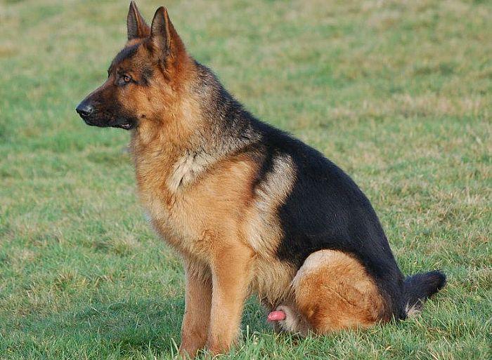 Previously Sold Dogs - Videx Dekka