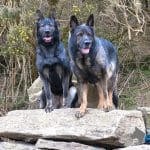 Protection-Dogs_Dante-and-Connie-on-rock-pile-at-A1K9