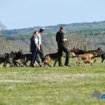 Ten-personal-protection-dogs-free-run-during-group-walk-at-A1K9-6137