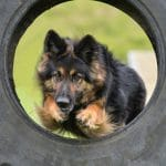 Trained-A1K9-Personal-Protection-Dog-Cita-Tyre-Jump-0209