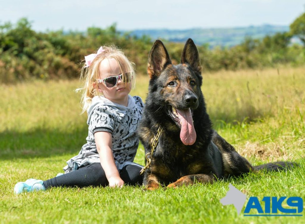 Personal Protection Dogs Family Protection Dog Uk A1k9