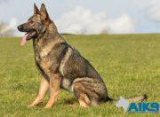 buffy family protection dog 2