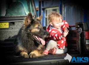 A1K9 Family Protection Dog Harry with baby-8779