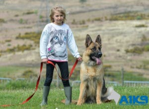 A1K9 Family Protection Dog Merci with Alice 1866