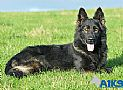 A1K9s Protection Dog Cir