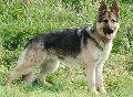 Suki sold dog