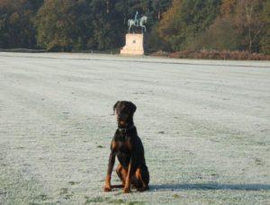 Aragon Personal Protection Dog