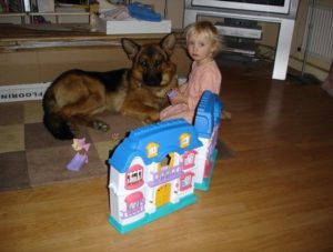 Axel Personal Protection Dog Testimonial