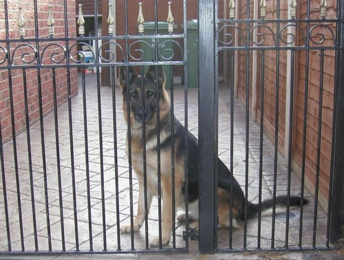 Kim Personal Protection Dog Testimonial