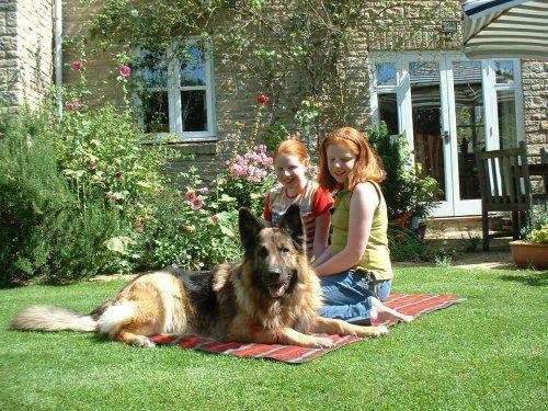 Major Personal Protection dog