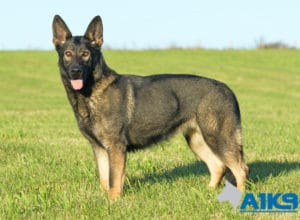 A1K9 Family Protection Dog Demi Stand 5903