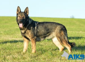 A1K9 Family Protection Dog Engie Stand 5923