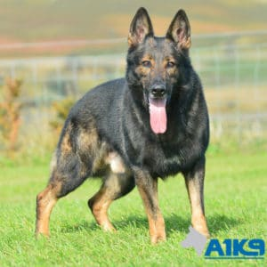 A1K9 Family Protection Dog Car Stand