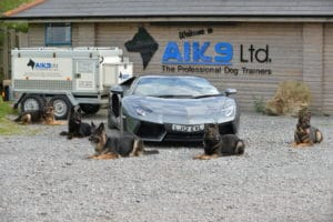 Protection dogs by Lamboghini