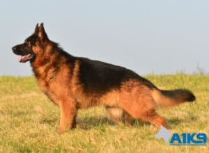 A1K9 Family Protection Dog Buddy Stand
